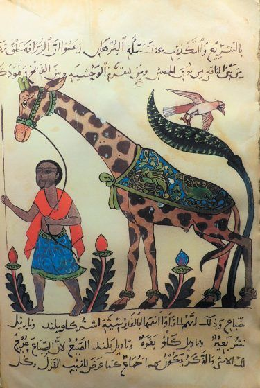 A colored drawing of a man leading a giraffe.