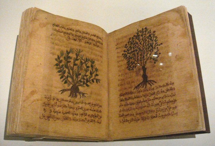 Open book with drawings of a large plant on each page and Arabic text.