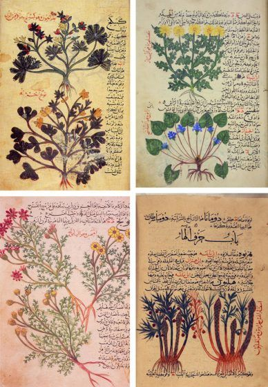 Four pages of a book, each featuring a plant with Arabic writing around the illustration.