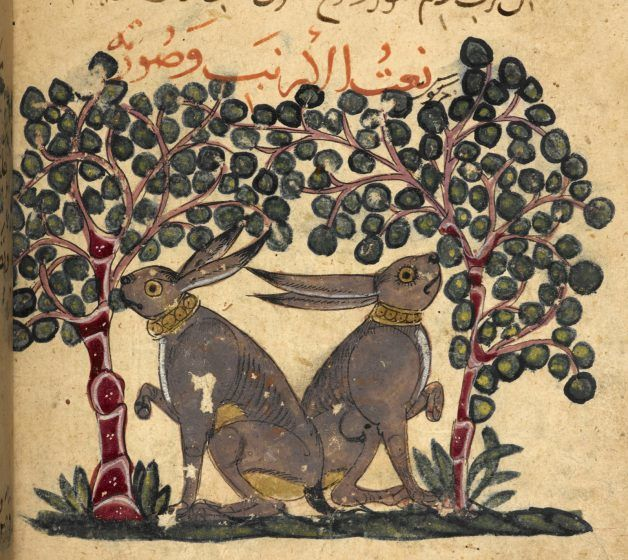 A colored drawing of two rabbits eating plants.